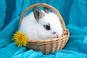 Rabbit in the basket
