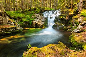 Beautiful cascades in the forest