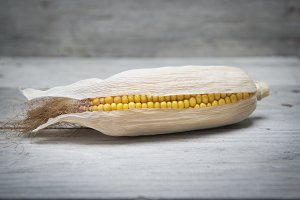 Corn ear on a wooden background