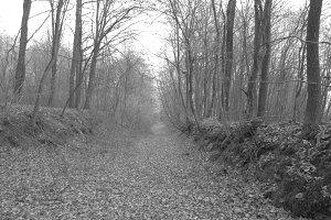 Black & White Path