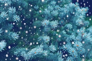 Bundle!Forest snow fall backgrounds