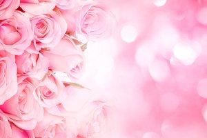 Sweet pink rose background