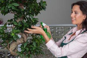 Florist caring a plant