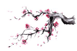 Sakura,Watercolor Spring blossoms