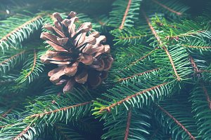 Winter forest fir tree branches background