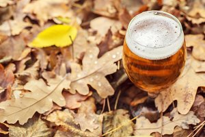 Beer in autumn forest