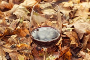 Wine in autumn forest