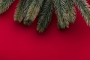 Christmas tree branches on red