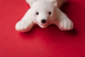 Cute festive polar bear
