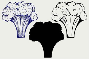 Fresh broccoli SVG
