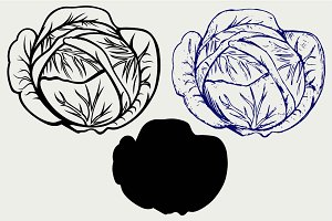 Cabbage SVG
