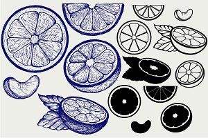 Oranges fruits SVG