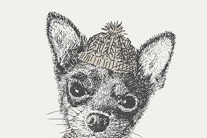 Chihuahua. vector.