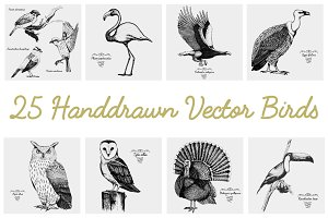 25 hand drawn vector realistic birds