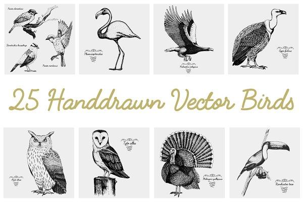 25 hand drawn vector realistic bird…