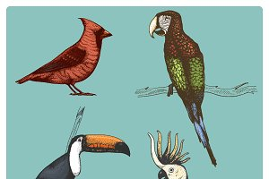 4 tropical birds, hand drawn