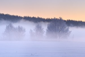Fog in nature panorama
