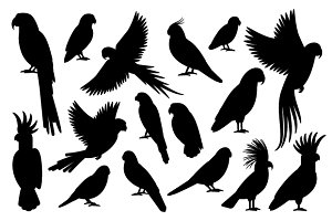 Vector parrot silhouettes