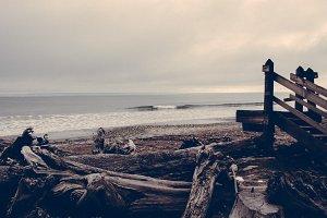 Driftwood Beach (Vintage Series)