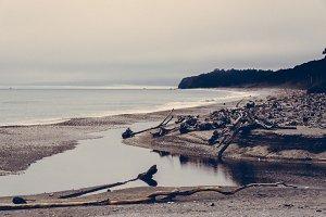 Driftwood and Beach in Summer Light
