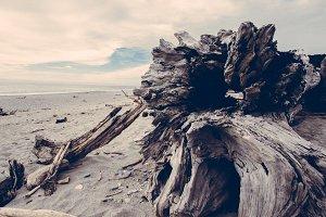Driftwood Beach on Vintage Beach