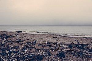 Driftwood on the Beach, New Zealand
