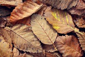 Autumn Sprawl