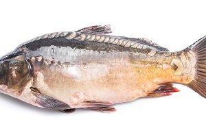 Fish carp.