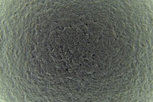 Microscope Shot Texture