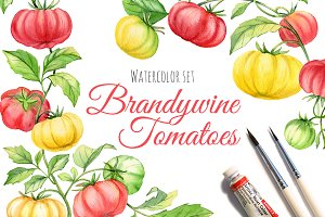 Brandywine Tomatoes - watercolor set