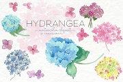 Watercolor Clip Art - Hydrangea