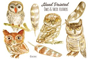 Watercolor Owls & Feathers