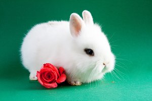 Rabbit with flower