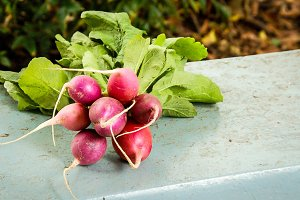 Fresh Farmers Market Radishes
