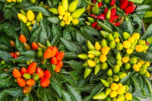 Colorful ornamental peppers