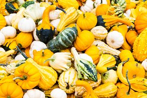 Brightly colored gourds on display