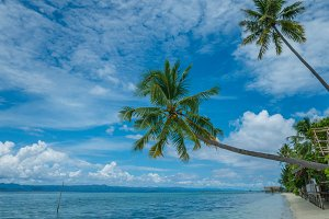 Two Coconut Palms near Diving Station on Kri Island, Raja Ampat, Indonesia, West Papua