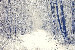 Winter forest with snow-covered path