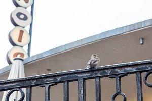Serious Sparrow