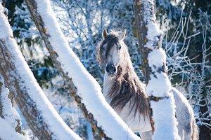white winter horse