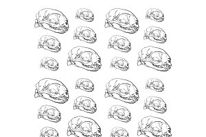 Seamless pattern of animal skull bac
