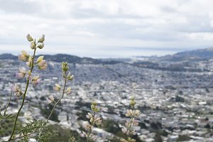 San Francisco View with Flowers