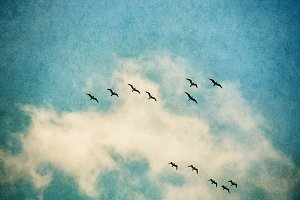 Birds on Textured Sky