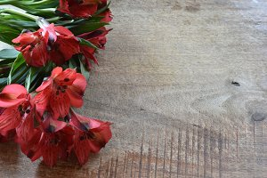 Christmas Red Flower Flat-lay