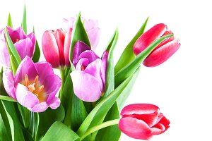 Bouquet of fresh spring tulips