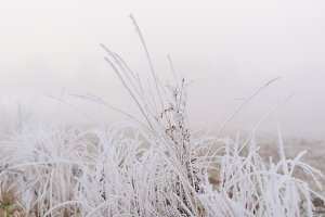 Frozen Grass in Winter