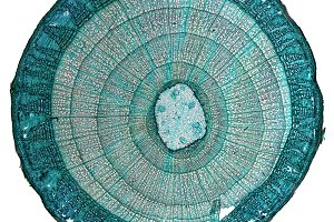 Micrograph transparent PNG
