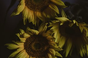 Moody Sunflowers Still Life Floral