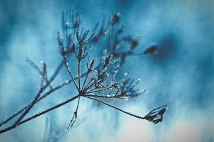 Twig with Ice in Winter