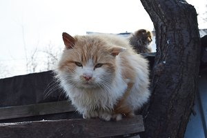 Cute homeless cat
